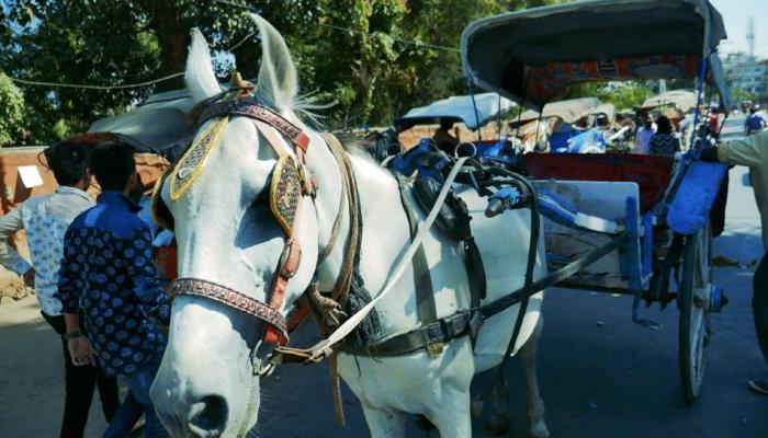 उत्तराखंड के IAS की बेटी अजमेर में चला रही है तांगा