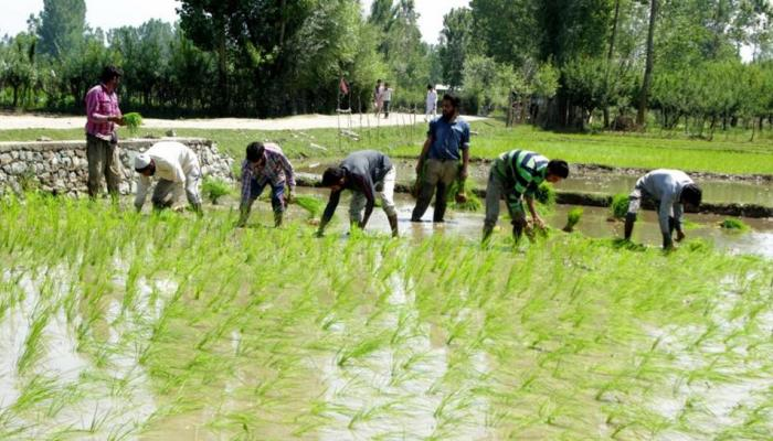 RBI के पूर्व गवर्नर ने कहा, किसान कर्ज माफी भारतीय अर्थव्यवस्था के लिए ठीक नहीं