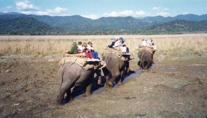 बाघ भी कॉर्बेट नेशनल पार्क की इन हथिनियों से खाते थे खौफ, 40 साल बाद हो रही हैं रिटायर