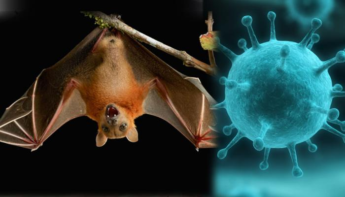 avoid these fruits to save yourself from nipah virus