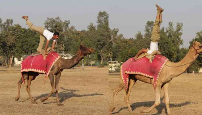 international Yoga Day: bsf jawan's performed yoga on camel, see pics