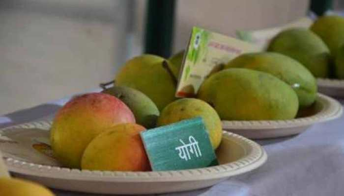 lucknow mango festival : CM yogi name mango popular in Market
