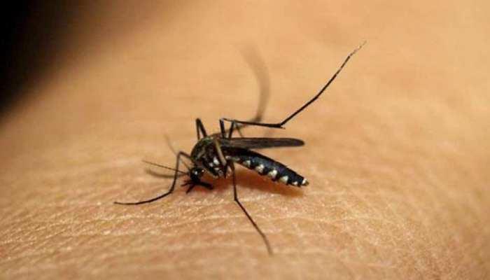 छत्तीसगढ़ में डेंगू का कहर जारी, अब तक 10 लोगों की हुई मौत