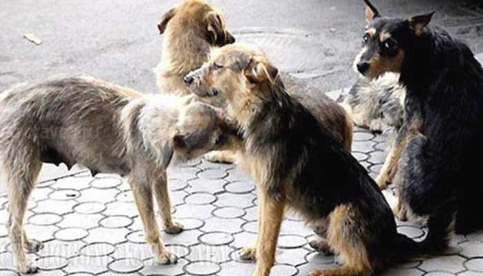 छतरपुरः अस्पताल में मरीजों के बिस्तर पर आराम फरमाते हैं कुत्ते, कॉरिडोर में घूमते हैं जानवर