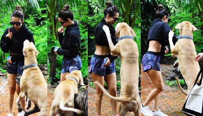 Malaika Arora attacked by pet dog in Mumbai see photos