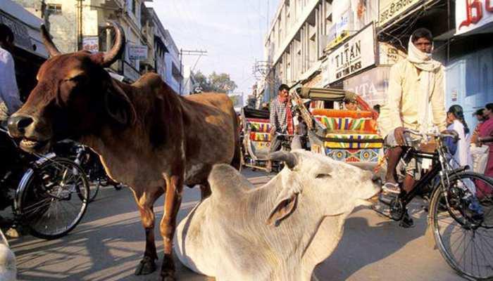 आवारा जानवरों से परेशान हुआ बारा, शिकायतों के बाद भी प्रशासन नहीं ले रहा एक्शन