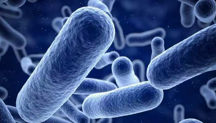 India today: Researchers found Bacteria in human stomach which produces electricity
