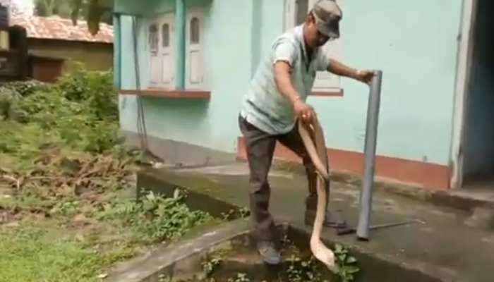 VIDEO: घर में घुसकर किंग कोबरा ने मचाई सनसनी, ऐसे निकाला गया बाहर