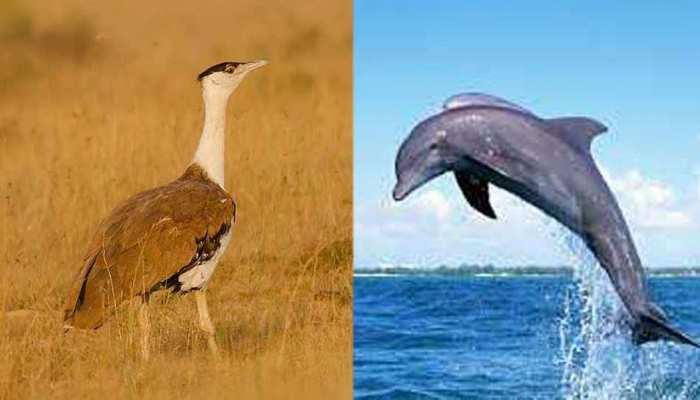 देहरादून: खतरे में ये चार प्रजातियां, भारतीय वन्यजीव संस्थान के शोध में हुआ खुलासा