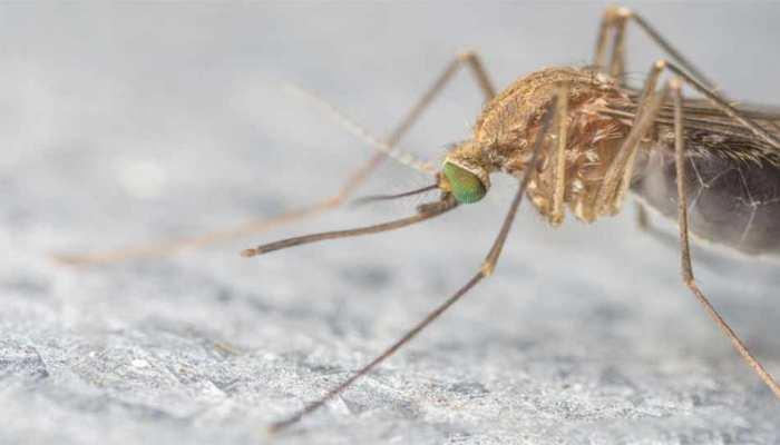 जीका वायरस की जांच के लिए स्वास्थ्य मंत्रालय ने मध्यप्रदेश भेजा एक केंद्रीय दल