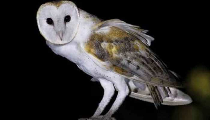 India Today: Man sacrifices barn owl to become rich, arrested