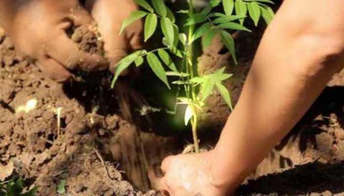 22 करोड़ पौधे लगाकर योगी सरकार यूपी में तोड़ेगी अपना ही रिकॉर्ड